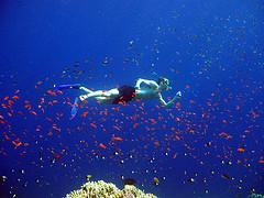 snorkel-fish.jpg