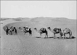 simpson_desert