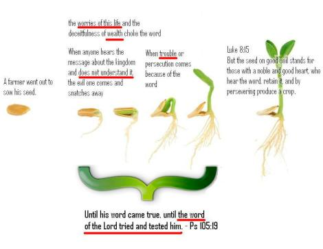 seed_sprouting_up_parable